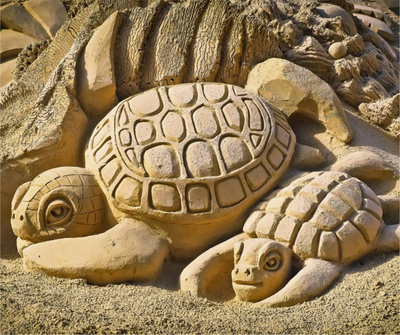 Turtle sand sculptures